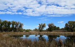 With Clouds (Patricia Henschen) Tags: rockymountainarsenal commercecity colorado nationalwildliferefuge denver park prairie wetland refuge clouds cloudy reflection autumn