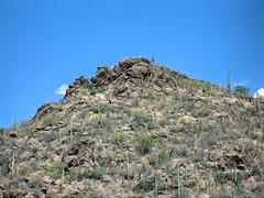 Saguaro and Cholla Cactus at Sabino Canyon (randyherring) Tags: sabinocanyon tucson arizona