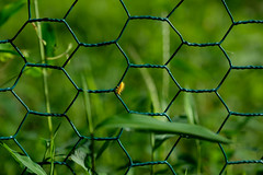On the move (Sal Tinoco) Tags: color colorful fence grass green insect nature outdoors yellow