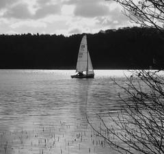 Solitary sail (dramadiva1) Tags: