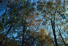 Eagle Creek Park, Indianapolis, Indiana (Roger Gerbig) Tags: eaglecreekpark indianapolis indiana fallcolors autumn rogergerbig canoneos3 ef28105mmf3545 kodachrome64 slidefilm pkr transparency 35mm 135film fullframe