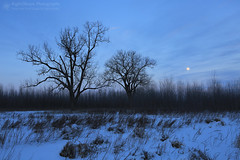 Snow Moon Rising (right2roam) Tags: boyerchute nebraska wildliferefuge prairie greatplains winter snowmoon moonrise moon trees right2roam snow snowy dusk evening moonlight