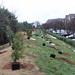 Ayrsley_Tree_Planting_2019_ (32)