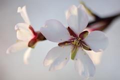 (Idoia -) Tags: macro flor nikon d7200