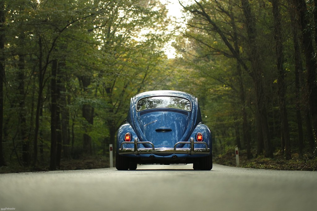 The Worlds Best Photos Of Beetle And Girl - Flickr Hive Mind-2802