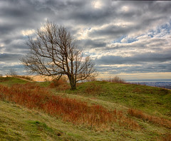 The tree on the hill (Through Bri`s Lens) Tags: sussex findon cissburyring tree hdr brianspicer canon5dmk3 canon1635f4