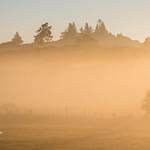 Golden Misty Sunrise thumbnail