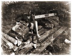 Cutting Firewood (Larry Buechler) Tags: kodak hc110 rodenstock crowngraphic largeformat 4x5 glassplate dryplate woods woodland jlanedryplates
