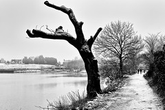 First Snow Fall of the Year (Missy Jussy) Tags: firstsnowfalloftheyear justinestuttard january 2019 northwest england rochdale hollingworthlake lake water snow uk unitedkingdom greatbritian landscape lancashire trees people path footpath grass house buildings littleborough highkey mono monochrome blackwhite bw blackandwhite 50mm ef50mmf18ll ef50mm canon50mm fantastic50mm canon5dmarkll canon5d canoneos5dmarkii canon cold winter ice frost frozen