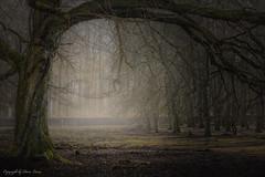 Märchenwald Wildpark Tierpark Weilburg (Doris Lucas) Tags: wald baum bäume märchenwald nebel naturart weilburg wildpark tierpark dorislucas art