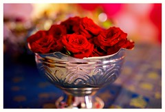 rose (Rajavelu1) Tags: flowers rose redrose lovely colours art creative availablelight dslr bokeh depthoffield blurredbackground artdigital