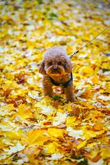 Parc Monsouris (jmarnaud) Tags: france paris 2018 akiko autumn walk dog chocolat tree leave colors park monsouris garden people