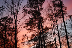 Trees And Beautiful Sky. (dccradio) Tags: lumberton nc northcarolina robesoncounty outdoor outdoors outside nature natural march spring springtime sunday sundayevening sundaynight evening silhouette tree trees treebranch branch branches treebranches treelimb treelimbs sky colorful colorfulsky sunset sunsetsky clouds pinkclouds bluesky nikon d40 dslr scenic woods wooded forest beauty beautiful pretty landscape