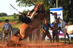 Mauro e Cascavel da Entrevero (Eduardo Amorim) Tags: gaúcho gaúchos gaucho gauchos cavalos caballos horses chevaux cavalli pferde caballo horse cheval cavallo pferd pampa campanha fronteira quaraí riograndedosul brésil brasil sudamérica südamerika suramérica américadosul southamerica amériquedusud americameridionale américadelsur americadelsud cavalo 馬 حصان 马 лошадь ঘোড়া 말 סוס ม้า häst hest hevonen άλογο brazil eduardoamorim gineteada jineteada