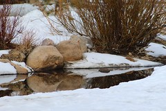Melting Stream (designsbykari) Tags: rockymountainnationalpark estespark deer elk magpie snow winter spring nature animals