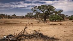 Impressionen -Waterhole (petraherdlitschke) Tags: africa animals landscape kgalagadi waterhole canon