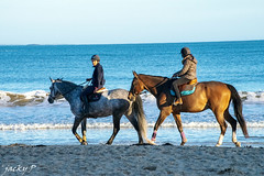 Blue time on the beach (Pierrot 49) Tags: horse beach duo france nationalgeographic nature nikonflickraward nikon