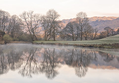 Bare Branches (Tracey Whitefoot) Tags: 2019 tracey whitefoot april river brathay trees reflection reflections reflected elterwater lake district lakes cumbria cold morning mist bare branches