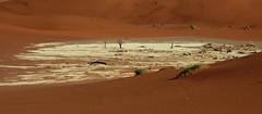 Deadvlei (14) (Richard Collier - Wildlife and Travel Photography) Tags: namibia desert deadvlei landscape sand southernafrica naturethroughthelens