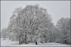 Days in black and white (johan van moorhem) Tags: belgium belgique belgië flanders vlaanderen westvlaanderen beernem sintjoris canalbrugesgent winter snow sneeuw landscape blackwhite monochrome