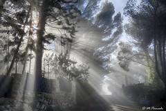 013704 - Albalate de Zorita (M.Peinado) Tags: niebla paisaje árbol árboles pino pinos albalatedezorita provinciadeguadalajara castillalamancha españa spain 2018 diciembrede2018 23122018 canonpowershotsx60hs canon ccby