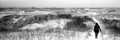 On The Moon To The Beach (selyfriday) Tags: selyfriday wwwnassiocomempty nassiocom hasselblad xpan analogue film 35mm wide panorama 2711 kodak kodaktri x400 kodaktrix400 400iso trix400 rodinal 125 7minutes 20˙c nederland netherlands dutch hollan d bakkum dunes walk path trail love