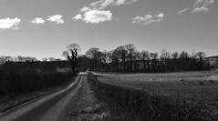 Country Lane, Ayrshire, Scotland. (Phineas Redux) Tags: countrylaneayrshirescotland ayrshirescotland countrylanes scottishlandscapes scottishscenery scotland