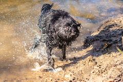 20190215-IMG_8706 (Alderbabbsack) Tags: struppi hund