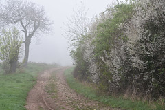 Brouillard printanier (Excalibur67) Tags: nikon d750 sigma globalvision art 24105f4dgoshsma paysage landscape arbres trees brouillard brume mist fog printemps spring frühling campagne chemin