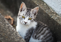stray cat (Christine_S.) Tags: cat kitten chat max canon eos mirrorless japan neko m5 portrait coth5 explore explored cute