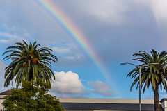 Seagull Flying Under the Rainbow Over Macy's at the Lakewood Center Mall (SCSQ4) Tags: bird birdflyingundertherainbow california cloudy cloudyskies lakewood lakewoodcentermall macys palmtrees rainbow seagull