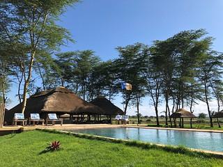 Africa Safari Lake Manyara swimming pool
