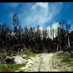AC37 Zahlreiche Waldbrände haben ihre Spuren hinterlassen thumbnail