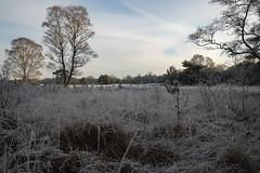 Winteraanzicht (m.ritmeester) Tags: ngc naturelovers nederland natuur hoenderloo hoge veluwe bomen landschap wit bos lucht winter