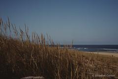 Plage de Moliets et Maa 2 (Sébastien Combet) Tags: molietsetmaa canon canonet fujichrome sensia reversal inversible diapositive summer plage beach landes