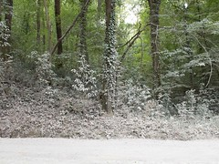 Regionale Veloce / 44 (Attimo) Tags: italia toscana lucca montesancarlo bosco alberi estate polvere 2018 regionaleveloce