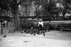 Relax in park | Buenos AIres (Magdalena Szata) Tags: 2018 analog argentina buenosaires ilforddelta100 ilfordid11 minoltacle blackwhite streetphotography ławka