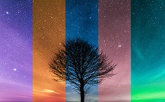 Rainbow tree (Andy barclay) Tags: tree trees field country side landscape nature land horizon astro astrology astrophotography stars star space galaxy milkyway night cold nighttime winter dark sky nikon d7100 sigma 1020mm wide long park dusk grass