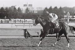 Winning horse (Architecamera) Tags: monochrome horse racing blackandwhite blackwhite