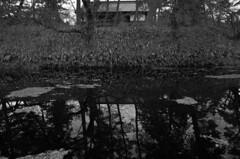 winter reflection (peaceblaster9) Tags: tree grass building pond reflection hirosaki japan blackandwhite bnw bw blackwhite leica monochrome 弘前 青森 白黒 モノクロ モノクローム 津軽 travel 旅 東北 winter 冬