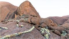 The Uluru . Outback (:: Blende 22 ::) Tags: hiking fullmoon bloodmoon sunset after moon evening australia australien nothernterritory outback olgas katatjuta uluru ayersrock redrocks redcentre rocks bluesky canoneos5dmarkiv ef2470mmf28liiusm