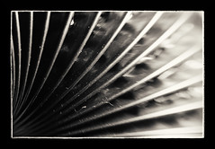 Ribbed (Alex . Wendes) Tags: combiflex tube 12mmextensiontube macro ribbed d7000 nikond7000 lensbaby lensbabycomposor sweet35 sweet35optic f56