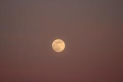 Spring Supermoon,Aberdeen_Mar 19_405 (Alan Longmuir.) Tags: grampian aberdeen misc sky moon springsupermoon