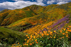 SoCal SuperBloom (Perry J. Resnick) Tags: pjresnick perryjresnick pjresnickgmailcom pjresnickphotographygmailcom ©2019pjresnick ©pjresnick nature light fuji fujifilm atmosphere atmospheric digital shadow texture shadows angle perspective naturallight white xf fujinon resnick outdoor rectangle rectangular sky clouds xpro2 fujifilmxpro2 landscape tones layers 16mm fujinonxf16mmf14 16mmf14 ca california drama superbloom socal flowers orange purple color colour lakeelsinore wildflowers poppies poppy