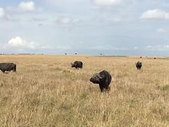IMG_1564 (suuzin) Tags: masai mara safari