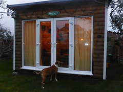 Let me in...it's cold out here! (andreboeni) Tags: reba boxer dog chien hund perros dogs hunden chiens logcabin