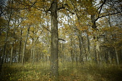 Forest (Kate O'Kina) Tags: forest photo forsale kateokina gallery