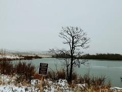 (lillypotpie) Tags: snow ice craterlake water frozen tree bird prairie prairiegrasses sign fishingspot mountains wichitamountainwildliferefuge nationalpark oklahoma