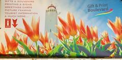 Poster (Steenvoorde Leen - 11.3 ml views) Tags: 2018 noordwijk noo badplaats zuidholland