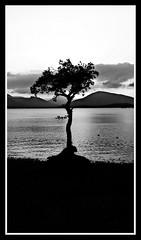 That Tree At Milarrochy Bay (Jason Thompson Photography) Tags: milarrochy bay milarrochybay balmaha tree beach sky black white blackwhite mono silhouette scotland loch lomond r1ght4ngle